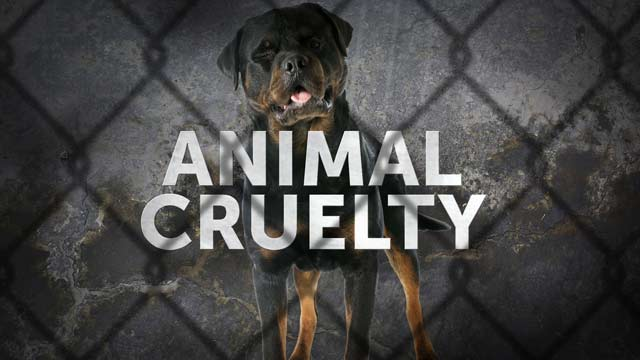Why SC's Animal Cruelty Laws Rank 45th (Image 1)_15291