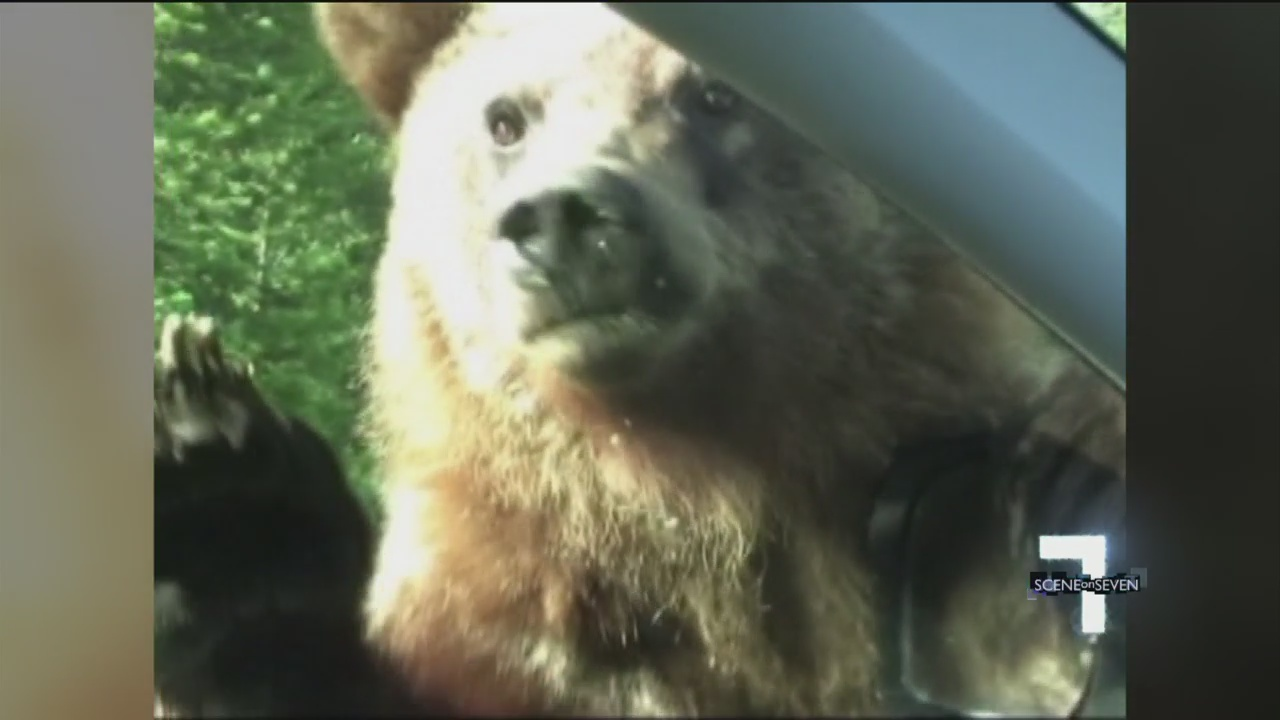 Grizzly Bear Encounter_21021