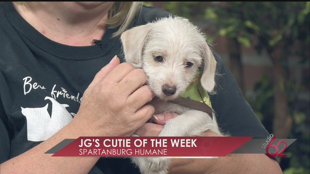 Cutie of the Week from Spartanburg Humane Society_9193