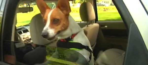 Tennessee has passed a law, allowing people to rescue animals from cars._26102