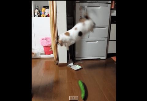 Cat Scared by Cucumber_26084