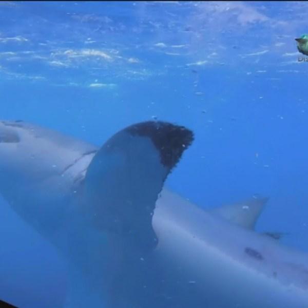 sharks_24003