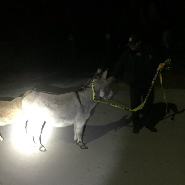 Donkey_118618