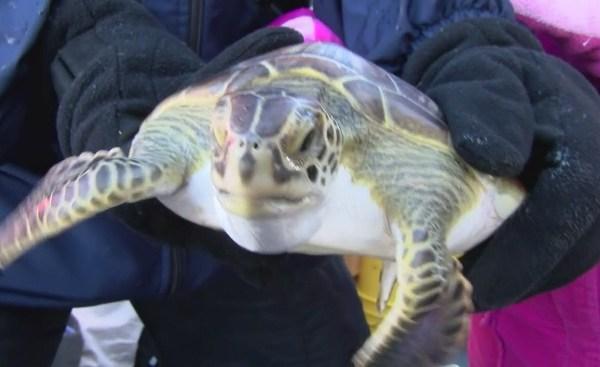 turtles_128622