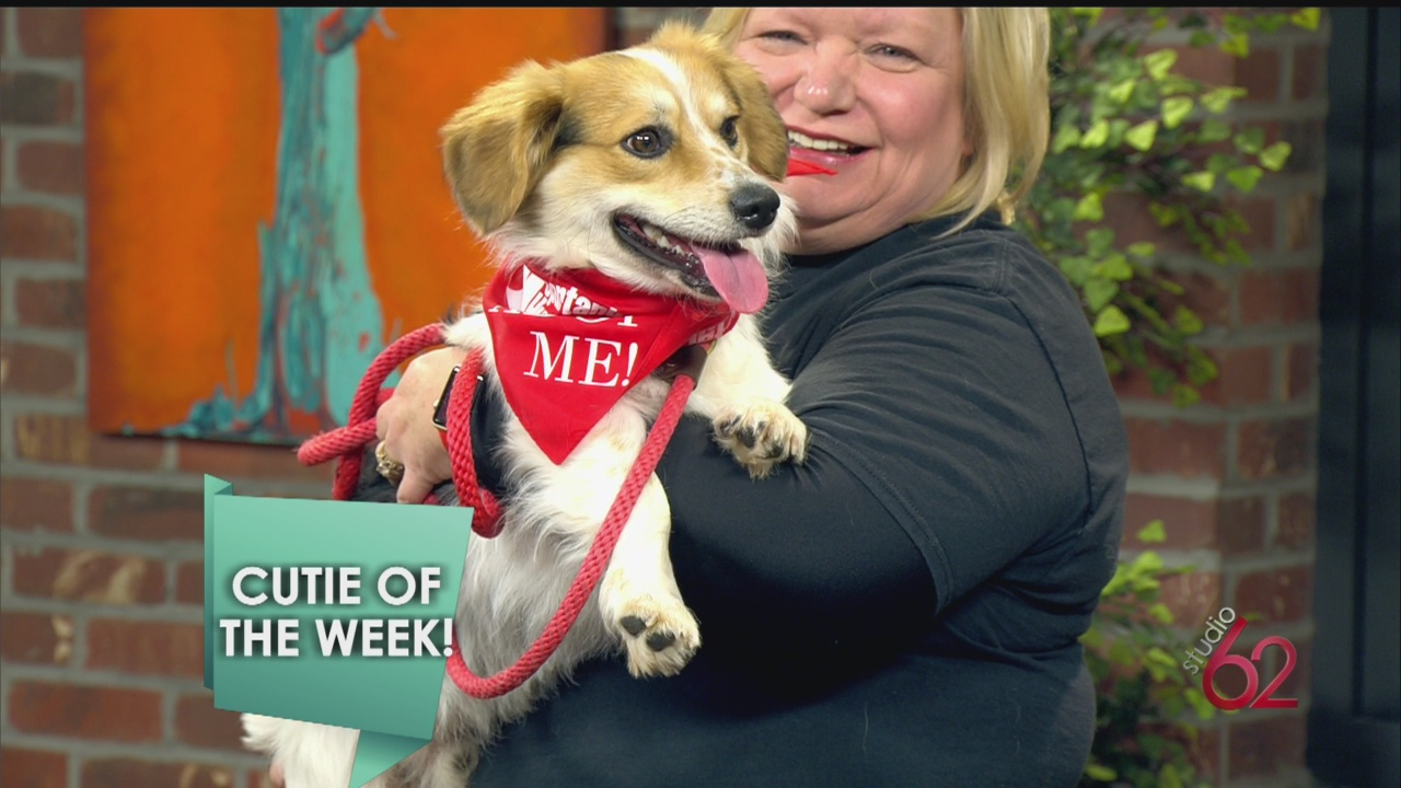 Meet our Cutie of the Week from Spartanburg Humane_24097