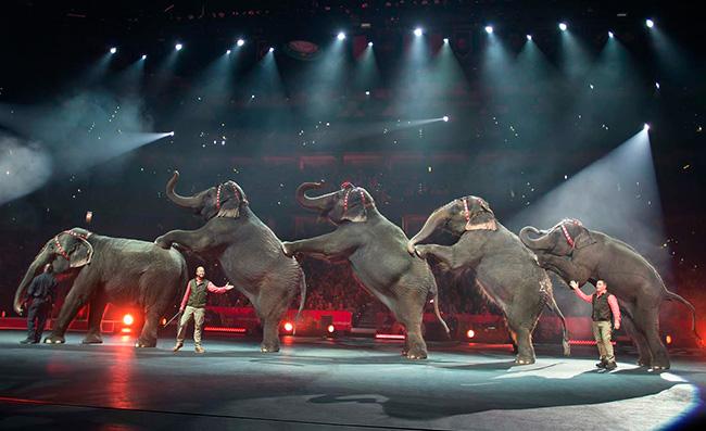 thumbnail_ringling-bros-elephants_178349