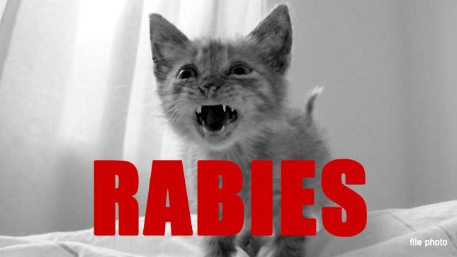 rabies rabid kitten