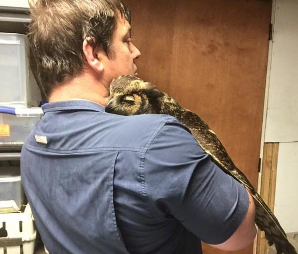 owl-hugs-rescue-worker_199514