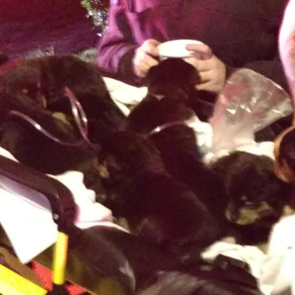 puppies_201410