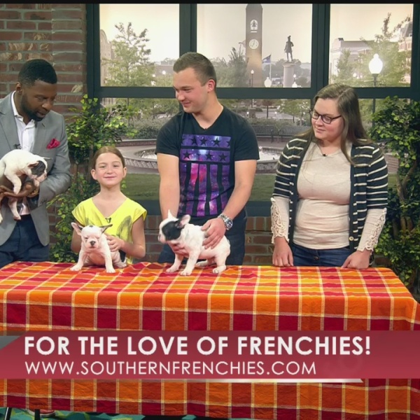 SouthernFrenchies_25962
