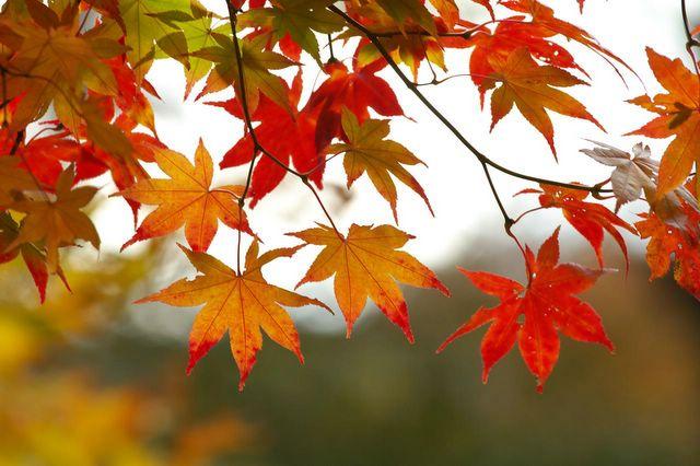 leaves_237777