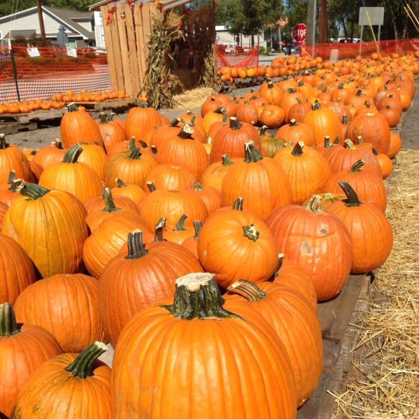 Holy Cross Pumpkin Patch_255685
