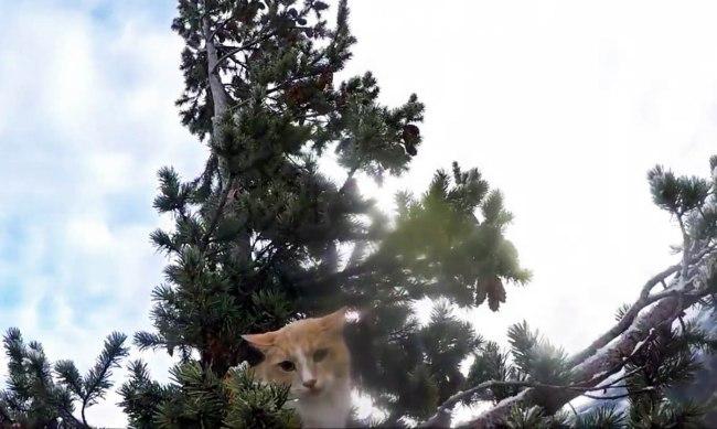 cat_284223
