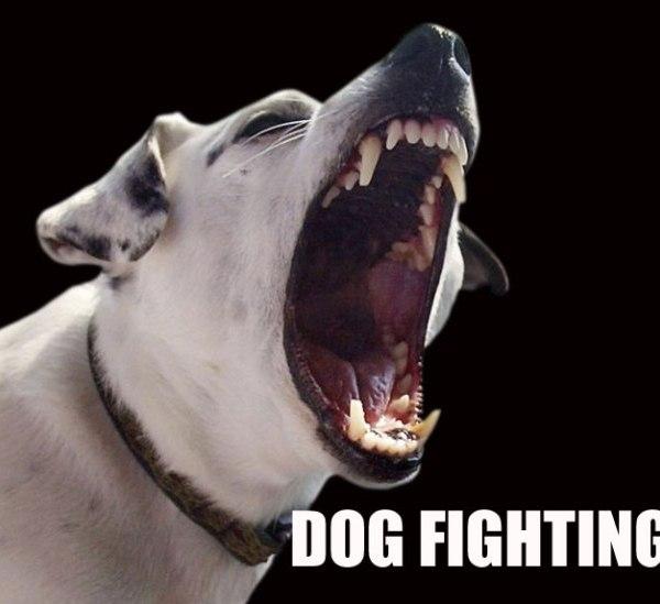 dogfighting_284361