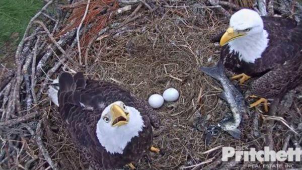 eagles_295916