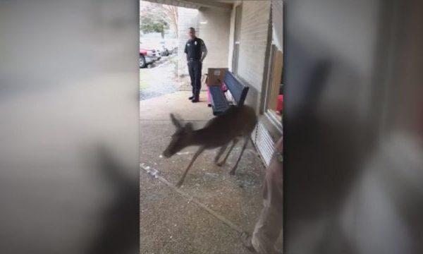 deer-in-school_303494