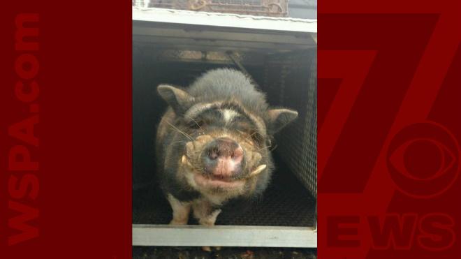 piggy-for-web-1_304875