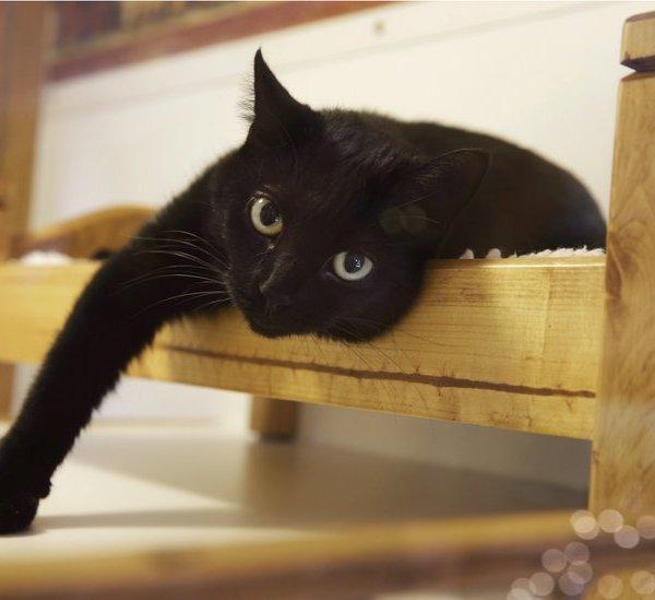 cat_323534