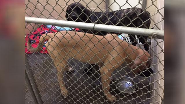 clarksville-dogs_328999
