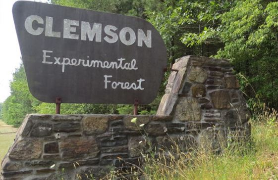 clemson-experimental-forest_312003