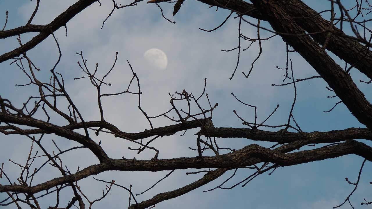 tree-winter-moon-generic_332823