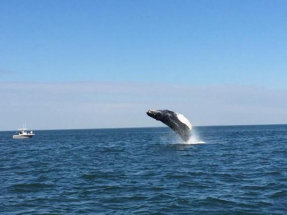 whale-1_330867
