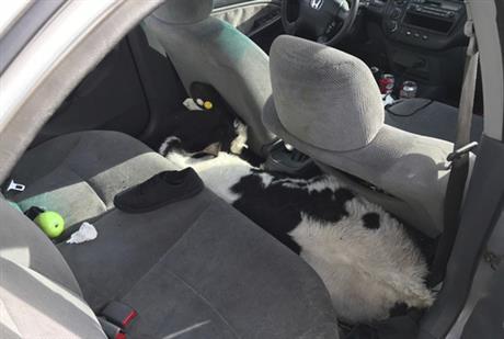 cows_342512