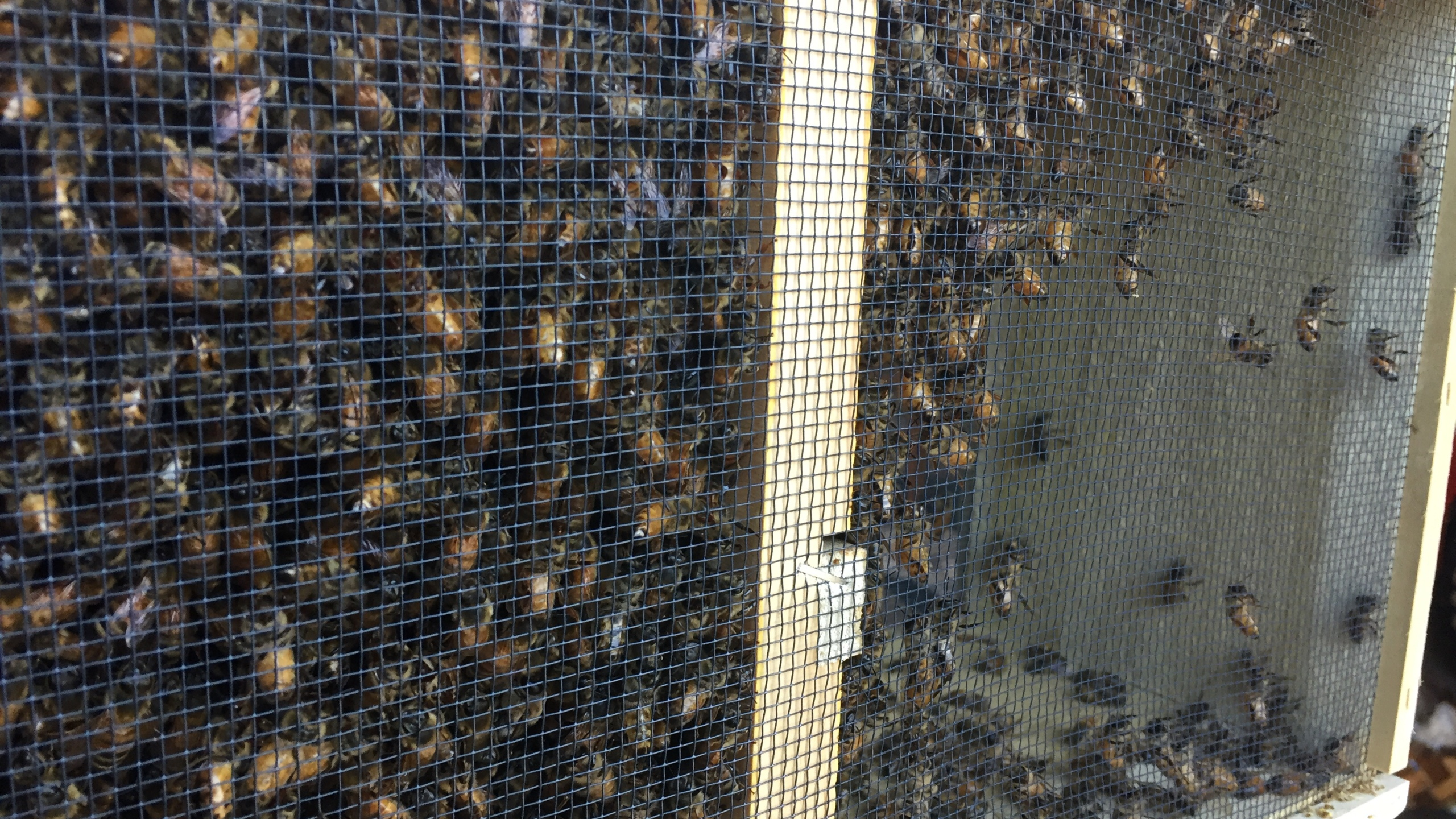 bees_354080
