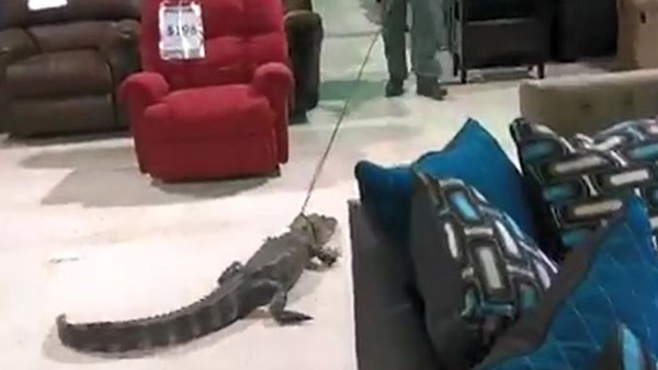 r-gator-in-store-web_bkg_te_355246