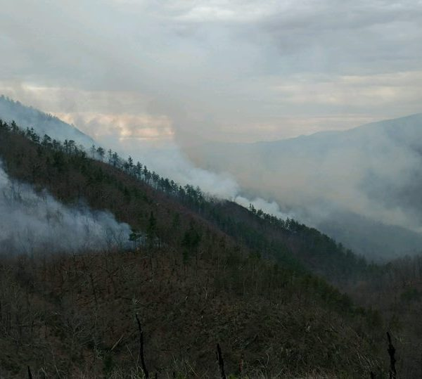 White Creek Fire 1_349688
