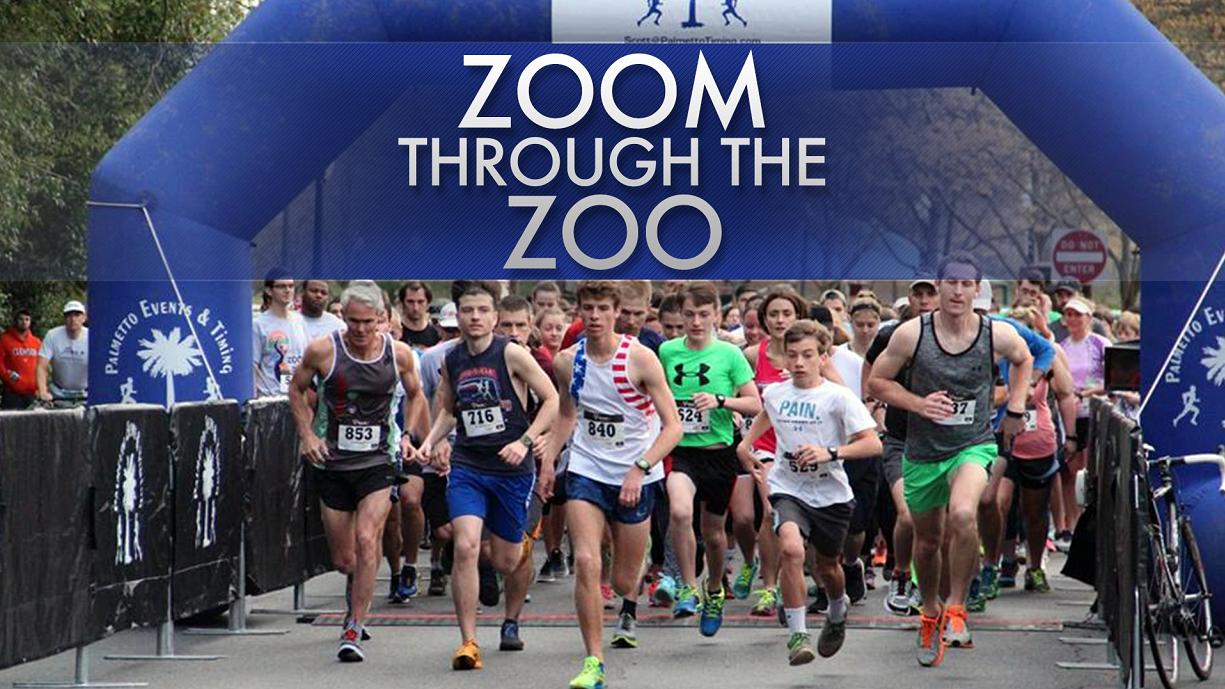 zoom through the zoo_345022