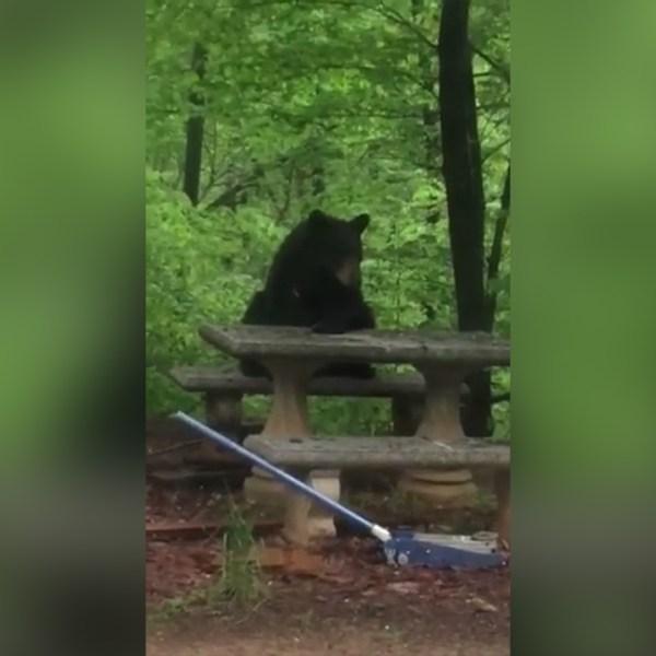 bear-at-table_370565
