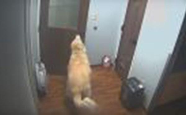 dog-WEB_365220