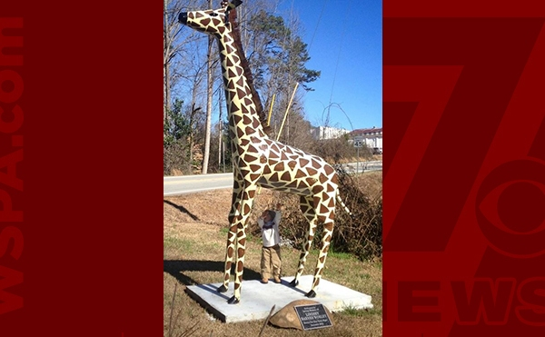 giraffe-WEB_363784
