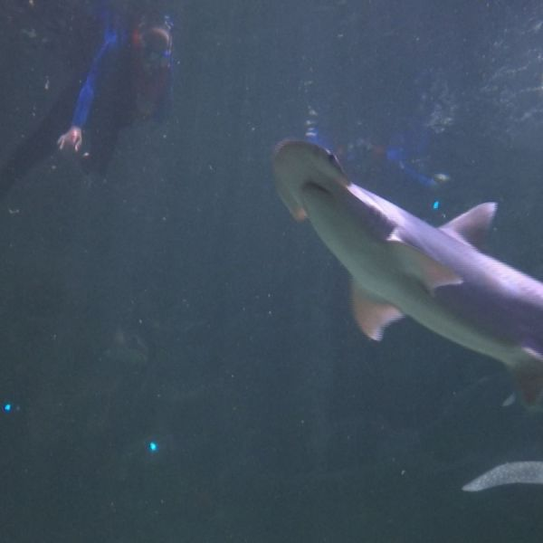 swimming-with-sharks-and-stingrays4_359336