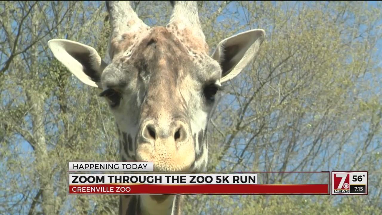 Zoom Through The Zoo 2017_356459