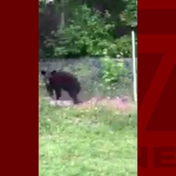 bear-at-Furman-WEB_390886