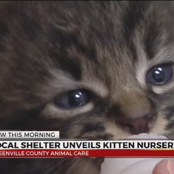 Greenville Co Animal Care Kitten Nursery_375076