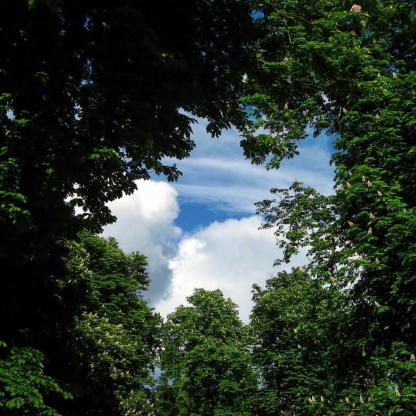 tree-220664_1920_381915