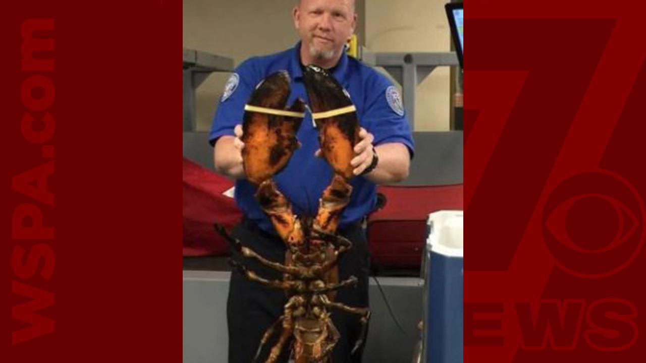 lobster-WEB_407348