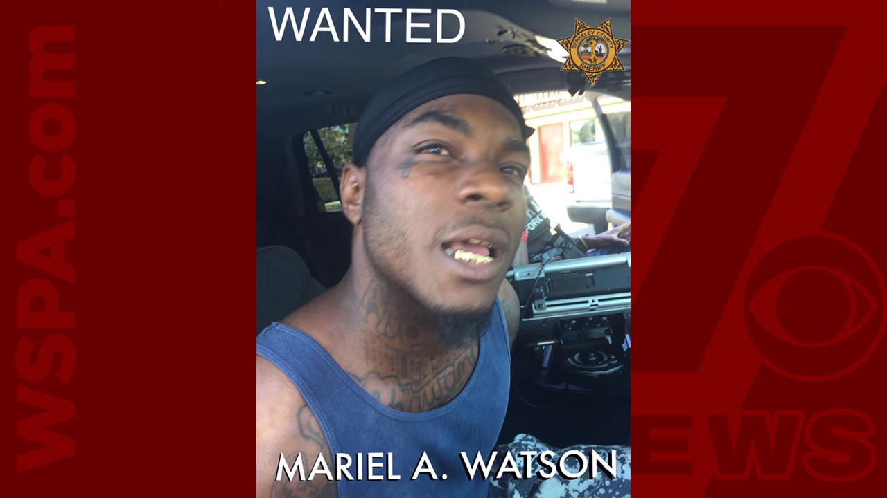 Mariel-Watson-WEB_418846