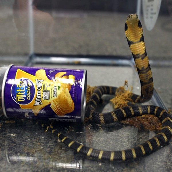 snake in can_425140