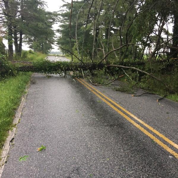 tree in road 2- Bryant Road_418419