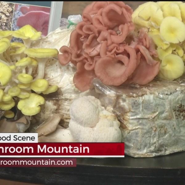 Mushroom Mountain WEb_451135
