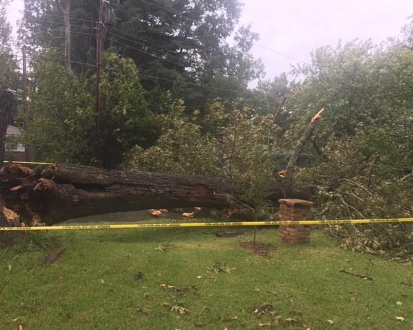 Fallen Tree_452879