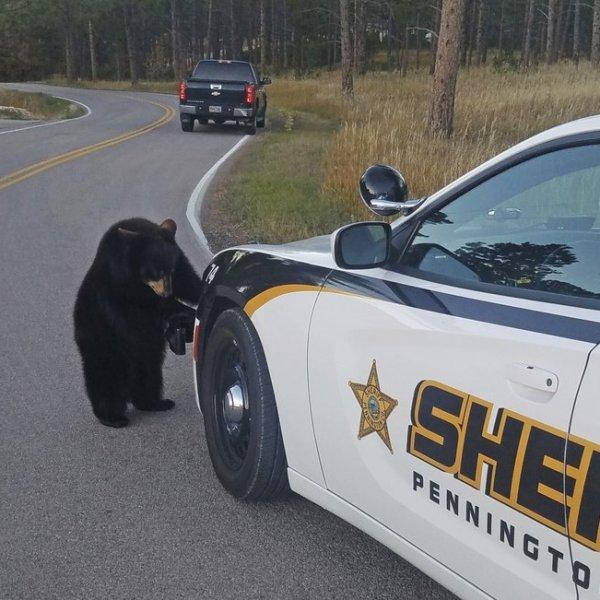 bear cub_473681