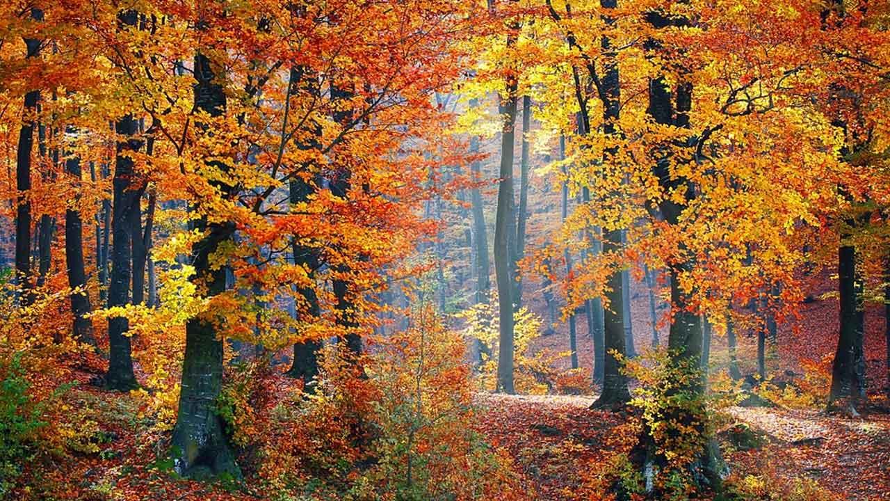 leaves-fall-autumn-trees-generic_473425