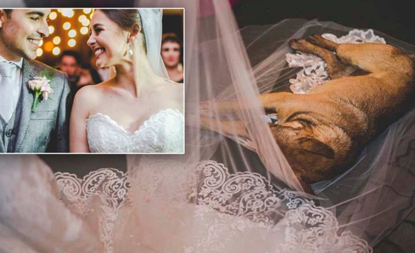wedding dog_476203
