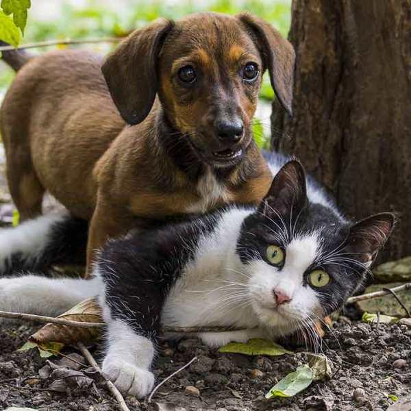 dog-cat-together-generic_378955