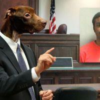 lawyer-dog-warren-demesme_484109